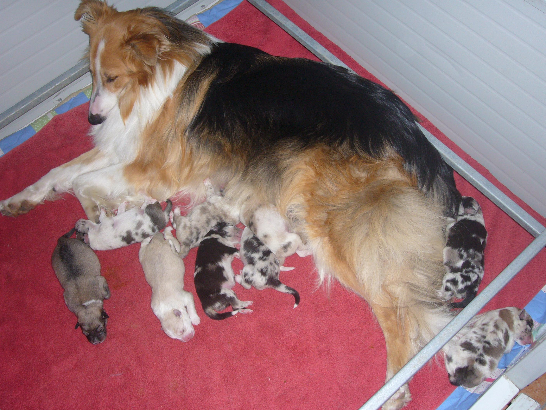 Cuccioli Wendy 9 femmine e 3 maschi