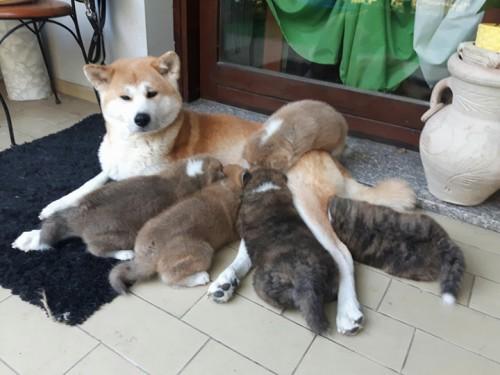 Emi Barfista da anni e i suoi cuccioli